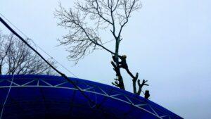 Удаление-дерева-в-дачном-поселке
